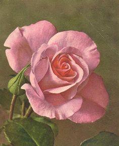 Stunning LifeLike Pink Rose on Alfred Mainzer by TheOldBarnDoor, $5.00