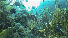 """This little video was shot at O'Brein's Cay in the Exumas at a little spot that people refer to as """"The Coral Gardens"""". Lovely place, just gorgeous. Sea Aquarium, Coral Garden, Sailboat, Fish, Blog, Sailing Boat, Sailboats, Blogging, Sailing Ships"""