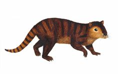 A furry, beaverlike mammal that survived the apocalyptic dinosaur-killing space rock that crashed to Earth 66 million years ago hid out in what is now New Mexico, grinding up leafy meals with its enormous molars.