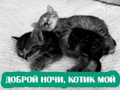 Very interesting post: Amusing Cat - 64 Pictures. Also dompiсt.сom lot of interesting things on Funny Cat. Cute Couple Quotes, Cute Couple Text Messages, Funny Cats, Funny Animals, Adorable Animals, Plan Image, Cute Couples Cuddling, One Step, Kawaii