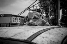 Dog | Street