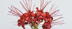 Carmen Almon   the Art of Botanical Tole   Garden Flowers