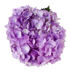How to Care for a Cut Hydrangea