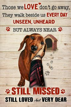 Dachshund Quotes, Dachshund Art, Long Haired Dachshund, Dachshund Puppies, Dogs And Puppies, Chihuahua, Cat And Dog Memes, Crusoe The Celebrity Dachshund, Weenie Dogs