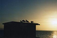 Aves en el mar