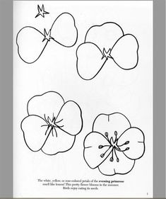 Customer Image Gallery for How to Draw Flowers (Dover How to Draw)