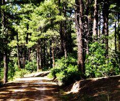 a bright path in colorado