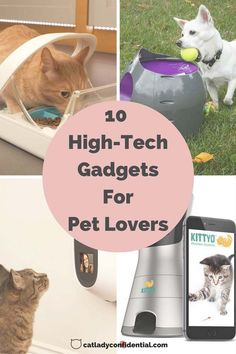 From cameras to automatic treat dispensers to keep an eye on your pet collars, here are some of the coolest pet gadgets to take the stress out of pet parenting.