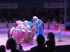 Vincent Wols is op verzoek van Circusweb naar Circus Alberti gegaan. Natuurlijk…