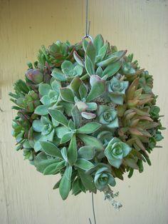 Succulent Orb Kissing Ball 8 inch diameter by SucculentSalon