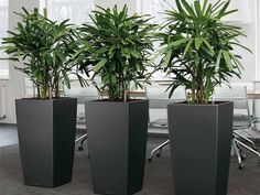 plants in office space - Google Search