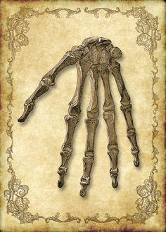 Viktorianischen Goth Steampunk Antique Anatomie Skelett Hand - 5 x 7 Zoll digitale Einzelbild - sofortiger Download, druckbare, digitaler Download