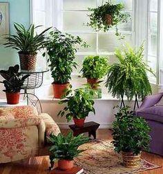 plantas dentro de casa - Pesquisa Google