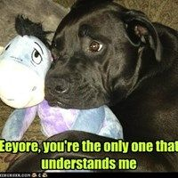 Eeyore Dog Has a Sad But Not a Lonesome