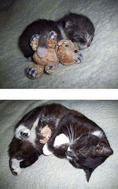 Exhibit C: A kitten with a bear who later grew up into a cat with a bear. | Can You Make It Through This Post Without Squealing?