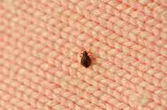 You don't need a pest control company to get rid of bed bugs. Use these powerful home remedies to get rid of them for good.