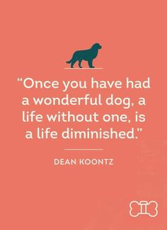 Heres favorite dog quote of the week! - Funny Dog Quotes - Heres favorite dog quote of the week! The post Heres favorite dog quote of the week! appeared first on Gag Dad. Dog Quotes, Animal Quotes, Dogs Of The World, In This World, I Love Dogs, Puppy Love, Pet Sitter, Hachiko, Jolie Photo