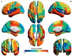 Miden la inteligencia humana en el cerebro. Es un paso más para comprender cómo funciona el cerebro, y así comprender sus enfermedades y, también para impulsar la inteligencia artificial. Al hilo, nos preguntamos si con esto también se podrán desarrollar pruebas menos sesgadas para calcular el coeficiente intelectual.
