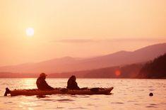 Les phoques au coucher de soleil