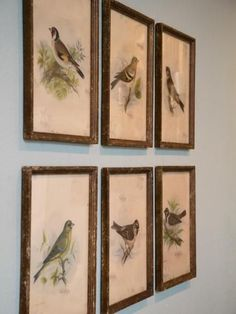 A grouping of six avian prints in antiqued wood frames adds an elegantly natural touch in keeping with the room's country-inspired theme.