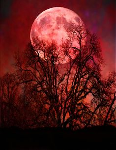 sixincheels: Lune rouge on We Heart It. Night Sky Wallpaper, Red Wallpaper, Scenery Wallpaper, Nature Wallpaper, Galaxy Wallpaper, Moon Pictures, Wall Art Pictures, Moon Photography, Red Moon