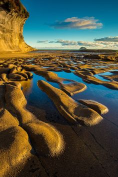 Muriwai Beach, Auckland, New Zealand.