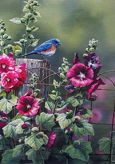 Blue bird and hollyhocks jenny jordan Watercolor Bird, Watercolor Paintings, Watercolors, Bird Pictures, Wildlife Art, Bird Art, Beautiful Paintings, Beautiful Birds, Pet Birds