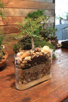 miniature bonsai tree - Google Search