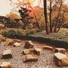 Golden days in the Amsterdam Japanese garden ✨ . . . . . #amsterdamcity #amsterdaminstagram #amstergram #igersholland #igersamsterdam #igersnetherlands #igersnederland #gramthedam #amsterdamview #amsterdamworld #amsterdamshots #amsterdamlove #amstelpark #japanesegarden #natureart #naturepics #naturelife #naturephotos #awakethelight #autumnleaves #autumnvibes #fallvibes #simplebeyondblog #ilove_simplebeyond #amomentofwonder #photosinbetween #goldenlight #colorfulworld Golden Days, Amsterdam City, Nature Pictures, Autumn Leaves, Japanese, World, Garden, Kids, Instagram