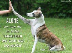 Greyhound rescue Belgium