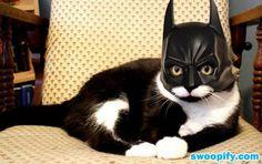 I Am SuperHero #humor #lol #funny