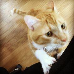 2015.11.27  #猫 #cat  ねぇねぇ、何やっているの?  僕と遊んでよ!!