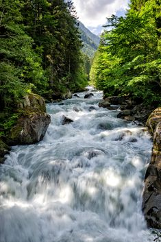 flowinginthewood ... Italian Alps -- by Fabio Cappellini on 500px