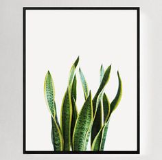 Original Cactus Photography No. 1 - Taken in Southern California Designed by…
