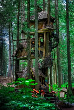 "coiour-my-world: ""Said to be the tallest tree house in British Columbia, Canada. You can find it somewhere near Revelstoke. (Image credits: imgur.com) """