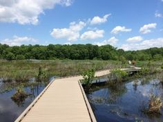 Huntley Meadows boardwalk, and other ideas for outdoor fun in Fairfax