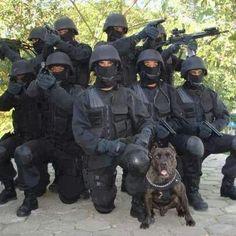 SWAT... #pitbull