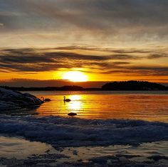 #ruissalo #swan #sunset #world_bestsunset #finland_bestsunset #artsunsets #global_beautiful_pictures #global_ladies #ig_wildplace #loves_skyandsunset #clouds_of_our_world #fiftyshades_of_nature #finlad_photolovers #sky_brilliance #sky_perfection #bestshots_sunset #ig_week_sunsets #super_photosunsets #worlds_beautiful_photos#jj_skylove #backyard_dreams #trb_sunsetsfx #heart_imprint#ig_great_pics#pocket_sky #loves_united_team##foto_naturel #nature_sultans #naturephotography #kamerakerho by…