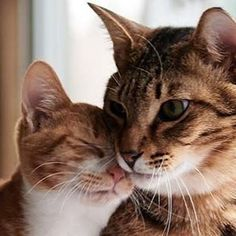 Managing a multi-cat household can be a challenge. The more cats living in an average-size living environment the more difficult it may be. Visit our website for tips & tricks {link in profile} . . . . . #cat #catsofinstagram #cattraining #dogtraining #dogobedience #shelter #animal #pet #rescue #rescuecat #meow #kitty #foster #adopt #adoptdontshop #humanesociety #hsbroward #cute #family #house #fortlauderdale #broward #florida #southflorida #advice #petadvice #pettraining #trainer #article