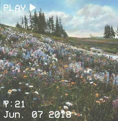 M O O N V E I N S 1 0 1 #vhs #aesthetic #field #flowers #trees #grass #sky #blue