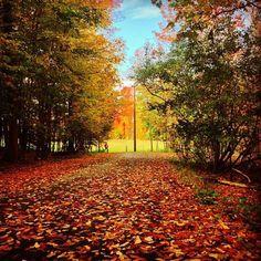 Beautiful autumn colors in Binghamton.