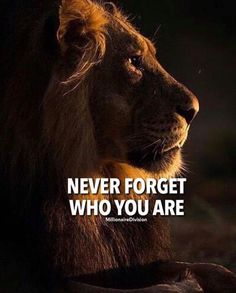 30 Of The Best Lion Quotes In Pictures - Motivational Quotes Of Courage & Strength Best Motivational Quotes, Positive Quotes, Inspirational Quotes, Hustle Quotes, Positive Attitude, Lion Quotes, Animal Quotes, Tiger Quotes, Encouragement Quotes