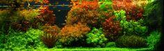 252-dutch aquarium.JPG 2,048×645 pixels