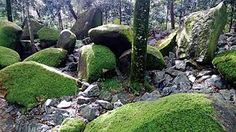 Image result for mosses on rocks