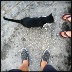 Katze, Toskana