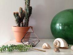 ABJ Glassworks terrarium at The Things We Keep studio