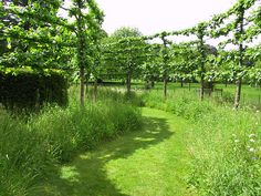 Pleached hedging