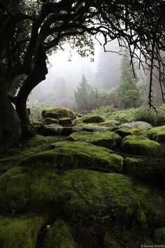 Beautiful~ Wake up Nature. Moss throughout nthe Forest land Beautiful~ Wake up Nature. Beautiful World, Beautiful Places, Beautiful Forest, Foto Nature, Nature Nature, Landscape Photography, Nature Photography, Photography Tips, Belle Photo