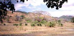 Sabana Y Bosque Tropical Seco
