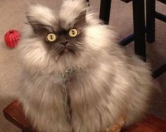 The 30 Most Important Cats Of 2012, visit for funny cat videos, http://www.buzzfeed.com/expresident/most-important-cats-of-2012